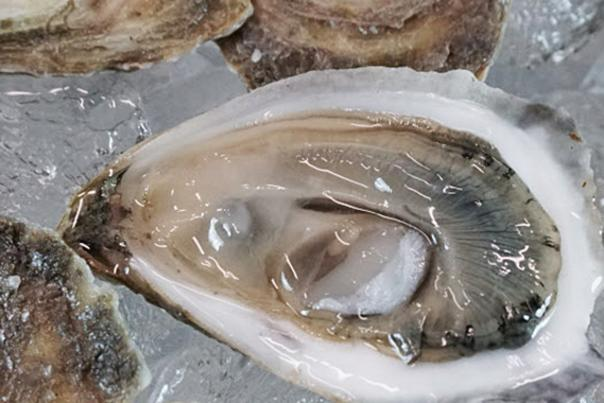 Small Bites - Oysters