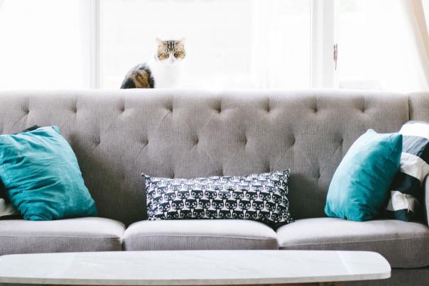 Indoor cat living room