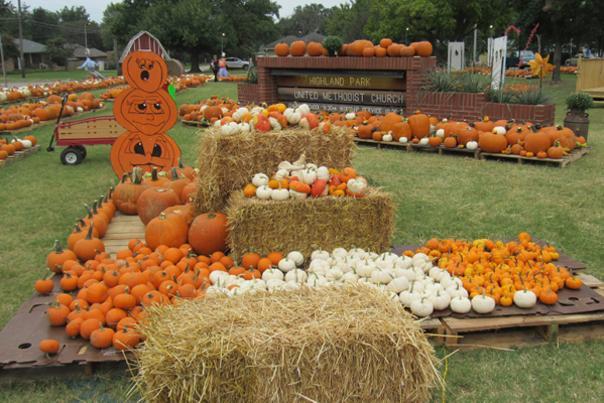 Pumpkin Patch Blog