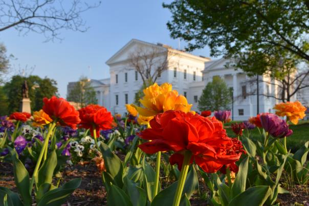 Virginia State Capitol in Spring