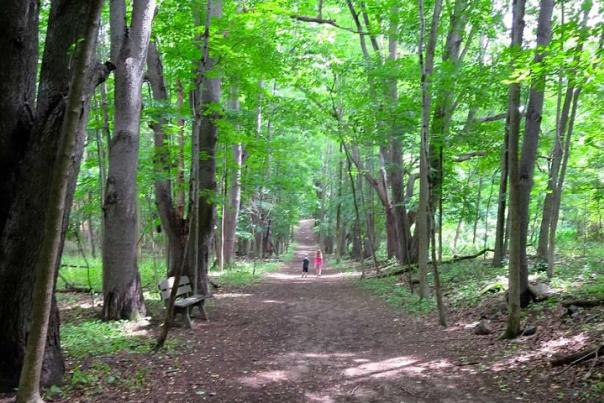 Nature Trail in Rochester, NY