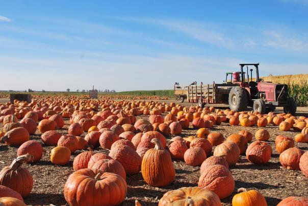 Vierra Farms Pumpkin Patch