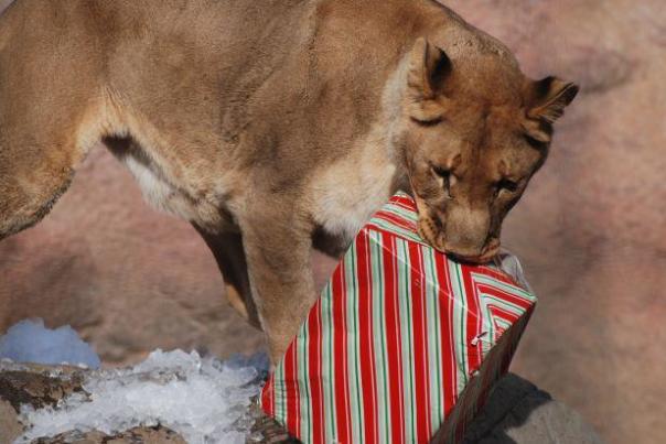 Holiday Magic_Photo courtesy of the Sacramento Zoo.