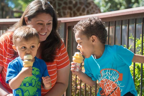 Ice Cream Safari