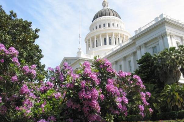 capitol_rhododendron_w640