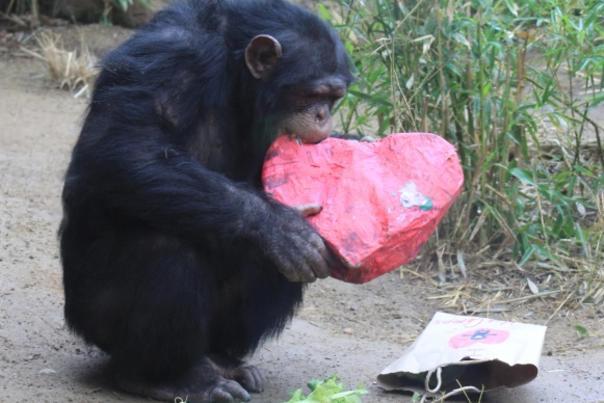 i_heart_sacramento_zoo