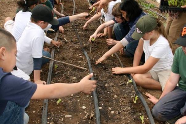 soil_born_kids