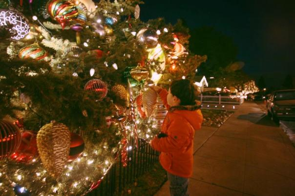 Kid looking at Christmas Tree