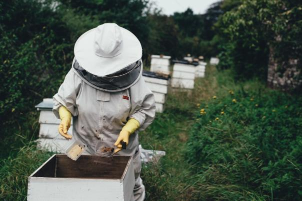 BeeKeeper-at-work-out-on-the-fields