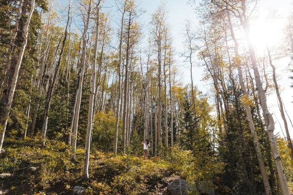 Autumn_Aspen_Vista