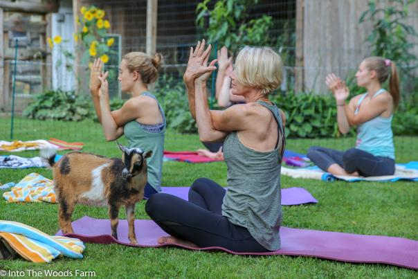 Women sitting on mats outside during yoga, with a goat posing for the camera.