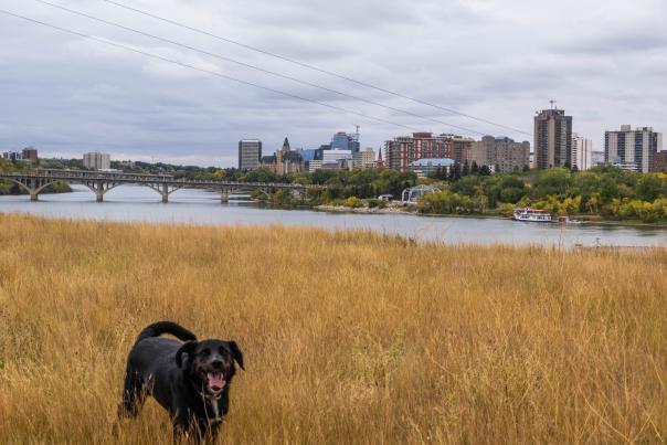 Fall in Saskatoon  - Clarence