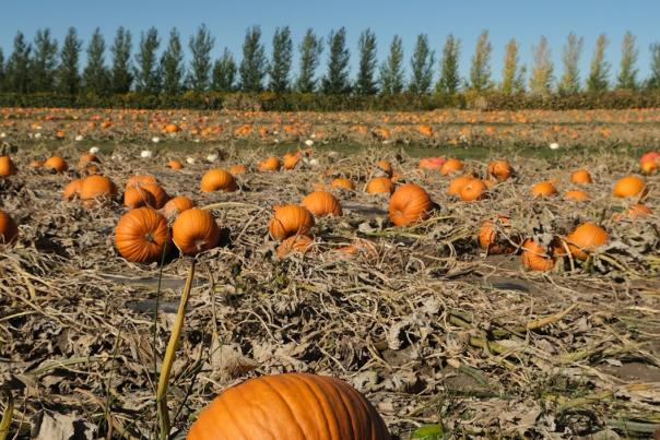 Things To Do in Saskatoon in October