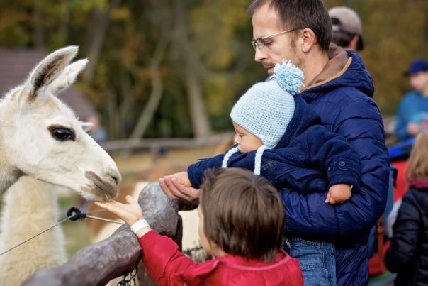 Family feeding Farm Animals