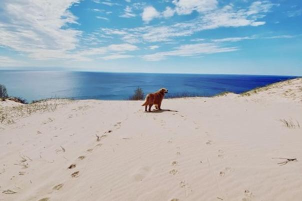 Cookie on the Open Dunes