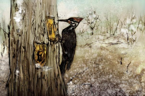 pileated_woodpecker-1