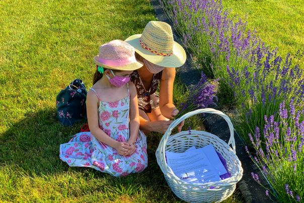 Lavender Waves Farm
