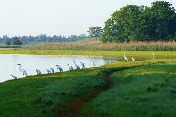 birds Narragansett