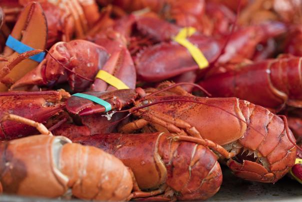 Charlestown seafood fest