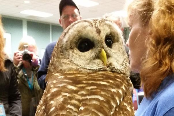 Indiana Dunes Birding Festival Recap - Part Three