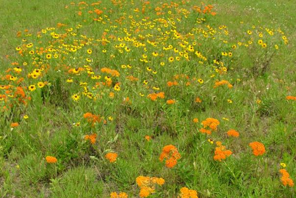 Nature Notes - Flowers have perfect timing