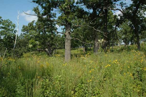 Nature Notes - Lucky to have oaks