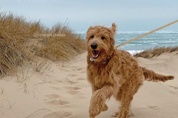 Dog on the beach - by margot.ritaaaa
