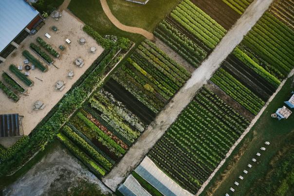The Farm at Finley Farms