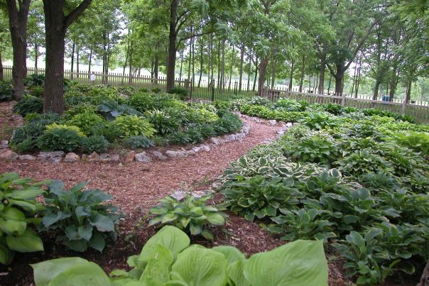 Close Memorial  Park Hosta Garden