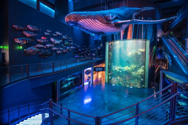 Whale hanging above Wonders of Wildlife Aquarium