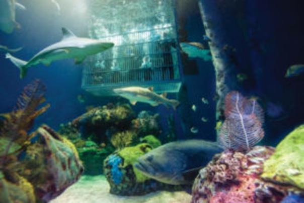 WOW Shark Dive