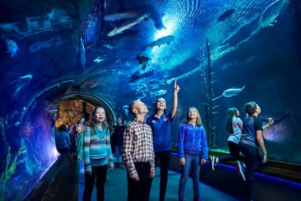 Wonders of Wildlife - River Monsters Tunnel - Education School Group