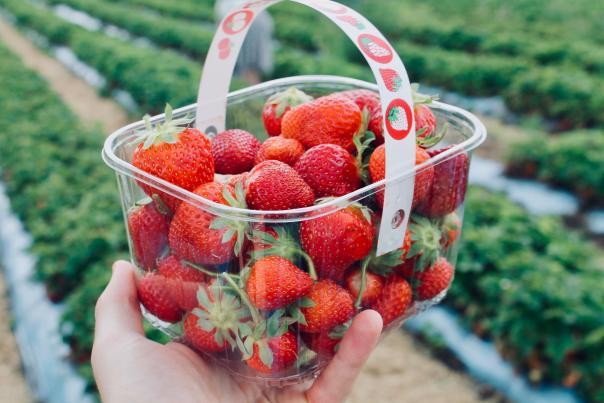 Strawberry farms in Springfield, Missouri