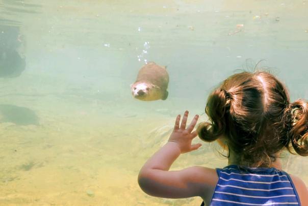 zoo-girl-watching-otter