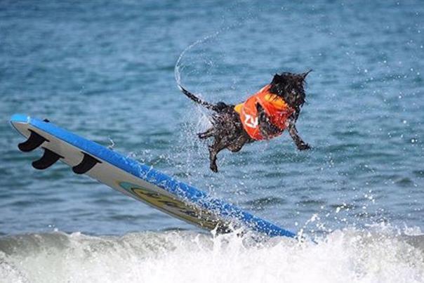 surfcitysurfdog