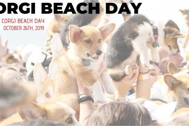 So Cal Corgi Beach Day | October 26, 2019