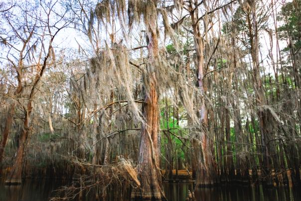Caddo Lake-Piney Woods-H