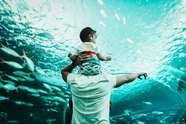 Let_Yourself_In_Still_Ripleys_Aquarium