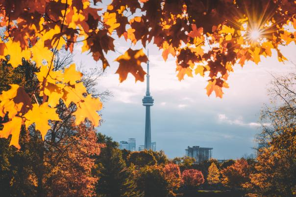 Fall leaves at Trinity Bellwoods park in Toronto