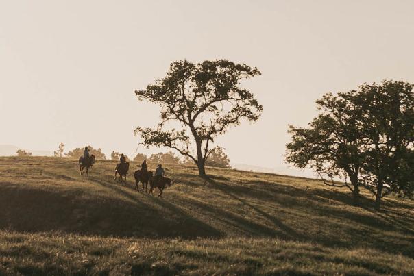 Cresting Hills on Horseback