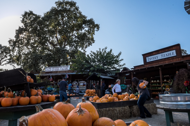 Jack Creek Farms Pumpkin Picking
