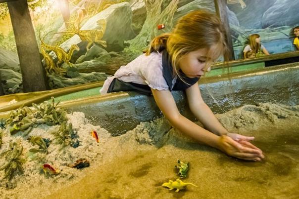 dinosaur museum tp