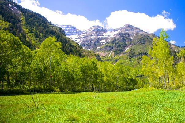Meadow in the Alpine Loop