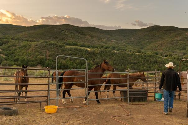 Horseback Ridding at Hobble Creek Outfitters