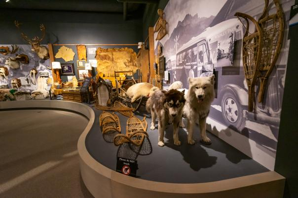 a museum display of taxidermy sled dogs