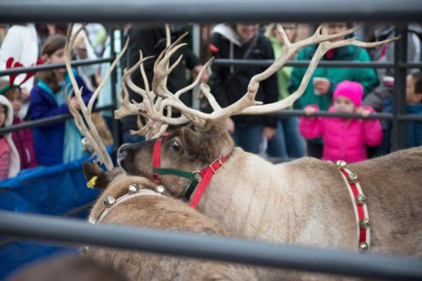 Reindeer at Uptown Village's Block Party