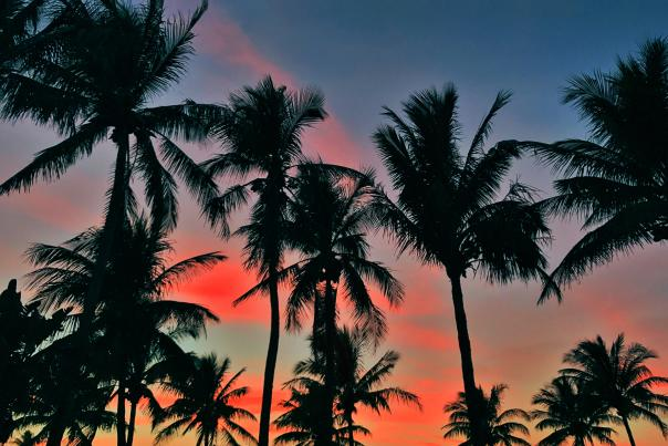 2-sunset-and-palms.JPG