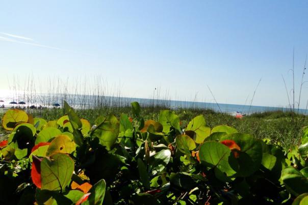 cocoa_beach_area_beaches_credit_lauren_tjaden%20%283%29.JPG