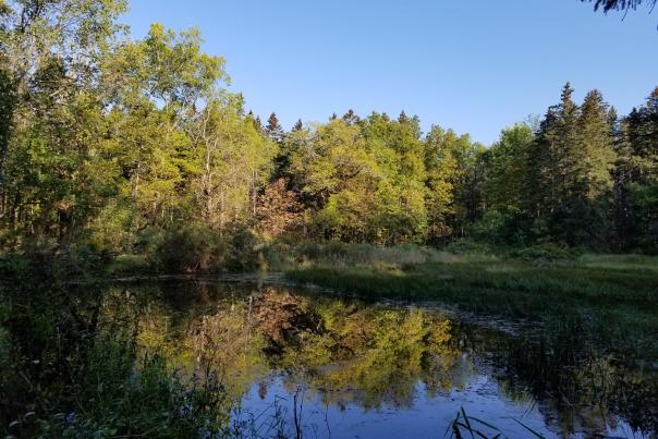 pond-in-finger-lakes-national-forest