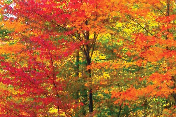 Fall Foliage Flume Path